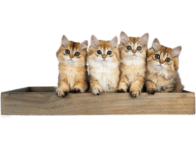 Sustainable Keto membership image of cats